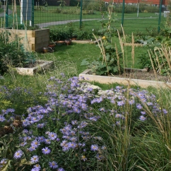 Sensory planting and raised beds for vegetables in a community allotment in Eastbourne