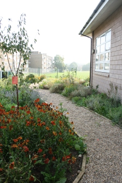 A gravel path winds past Helenium 'Moorheim Beauty', fruit trees and sensory planting in this secondary school garden
