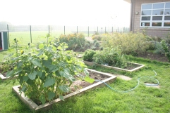 One year into allotment growing for The Eastbourne Academy